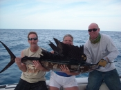 Live Baiting For Sailfish.