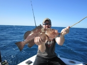 Groupers, Muttons, Yellow Tails.
