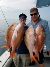 Snapper and grouper