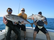 Big Amberjacks, Mutton Snappers, and Tons of Sharks