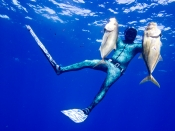 Spearfishing with Great Visibility