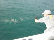Tarpon in key west harbor !!