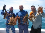 yellow tails, lobster, hog fish