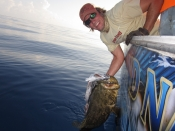 2 6hr shark and grouper trips