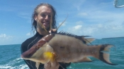 Hogfish killing